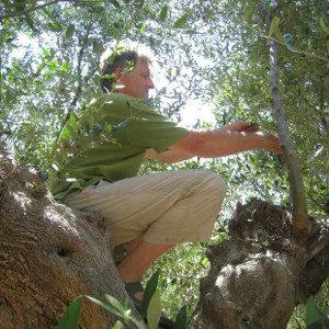 Au coeur de nos oliviers