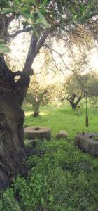 meules en pierre TroisTortues